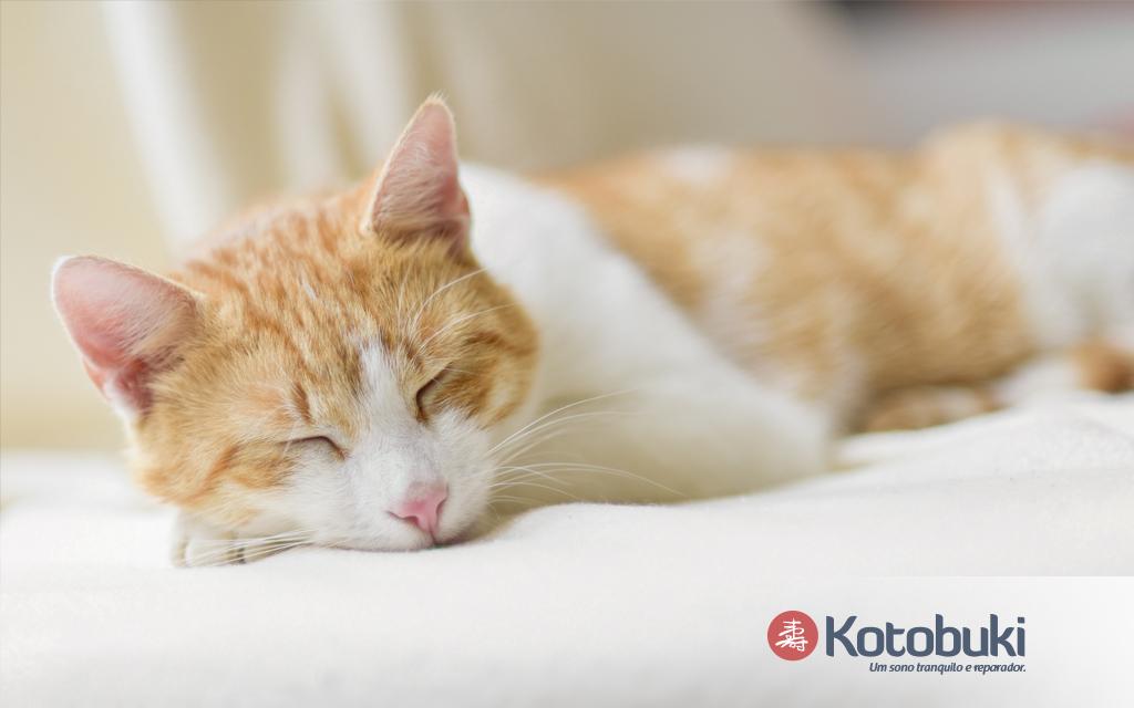 Dormir ou não com o seu animalzinho na cama