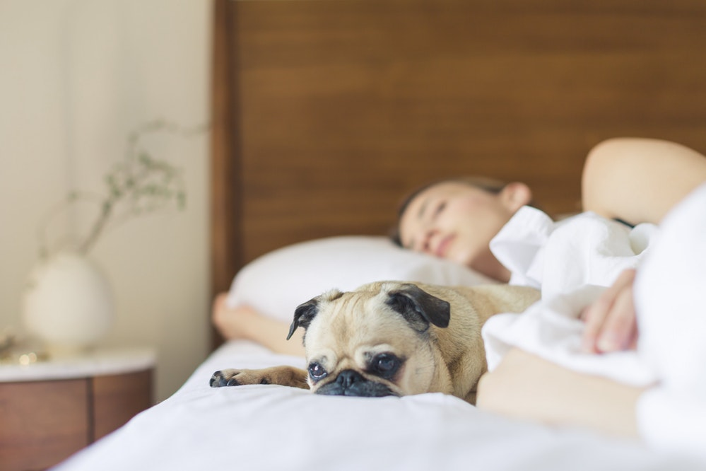 Dormir com o pet: afinal, o que preciso saber?